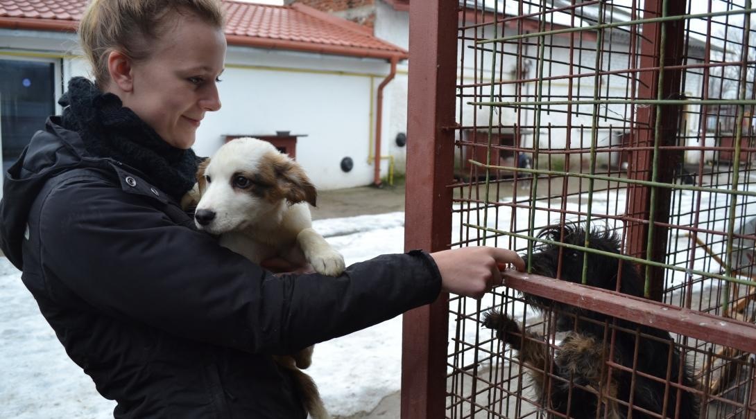 A volunteer gives the dogs attention while she works with animals in Romania.